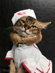 another nurse cat selfie