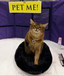 Cat Show Celeb-Kitty