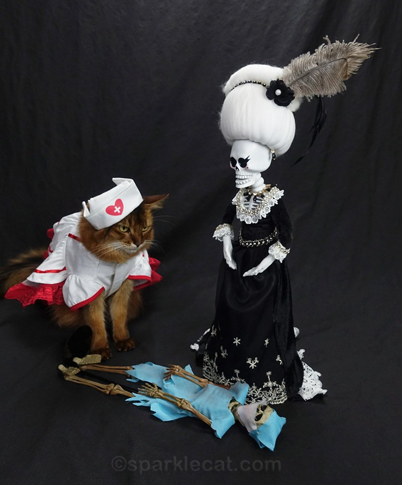 nurse cat looking at passed out Dr. Bones