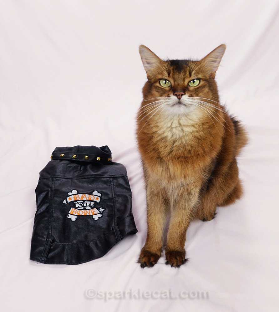 Summer gets to be a biker cat when she models a faux leather jacket - and accessories to match!