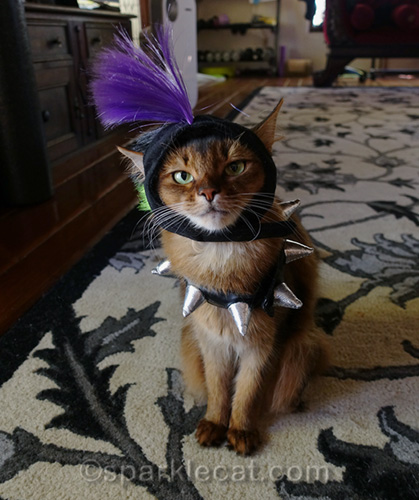 somali cat wearing punk rock costume