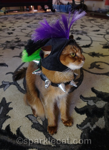 somali cat showing punk cat costume from profile view