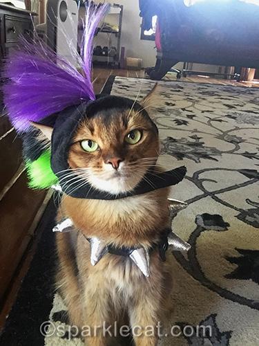 somali cat taking punk cat selfie