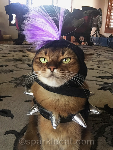 somali cat taking a punk rock selfie