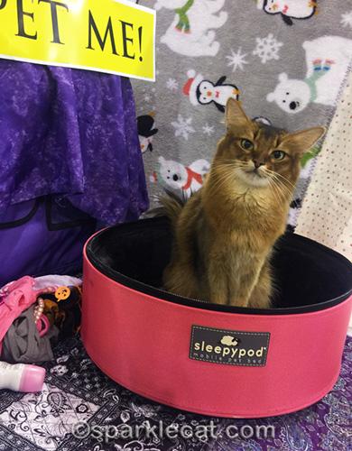 somali cat sitting in Sleepypod at Pomona cat show