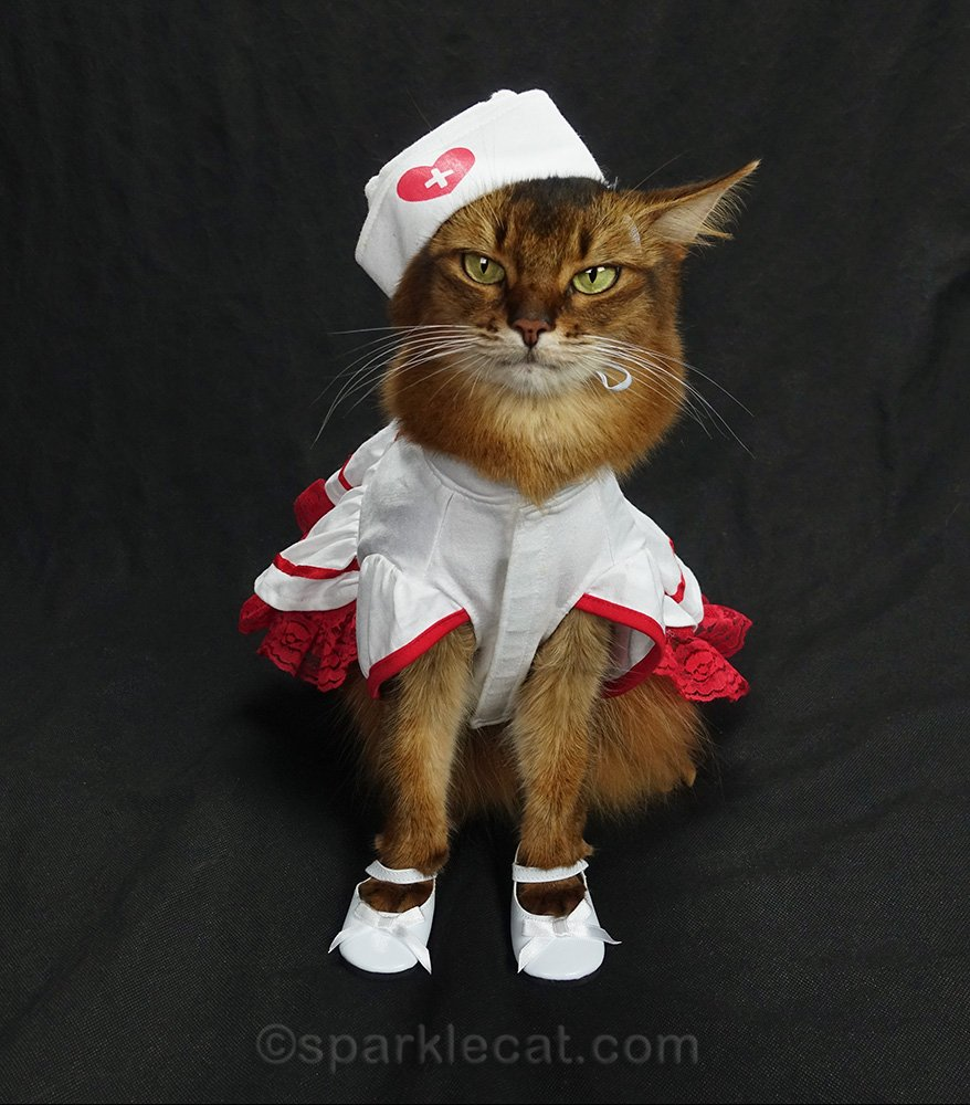 nurse cat posing nicely with shoes