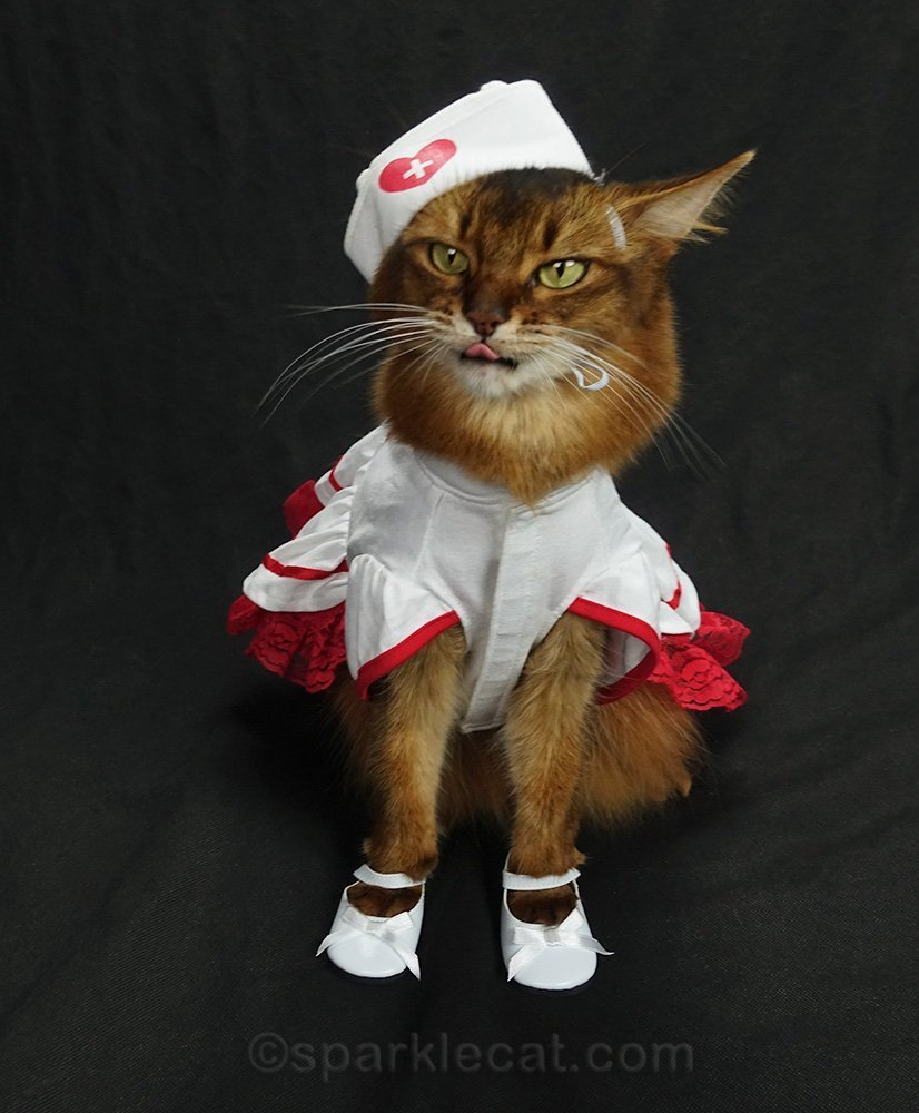 nurse cat with tongue out