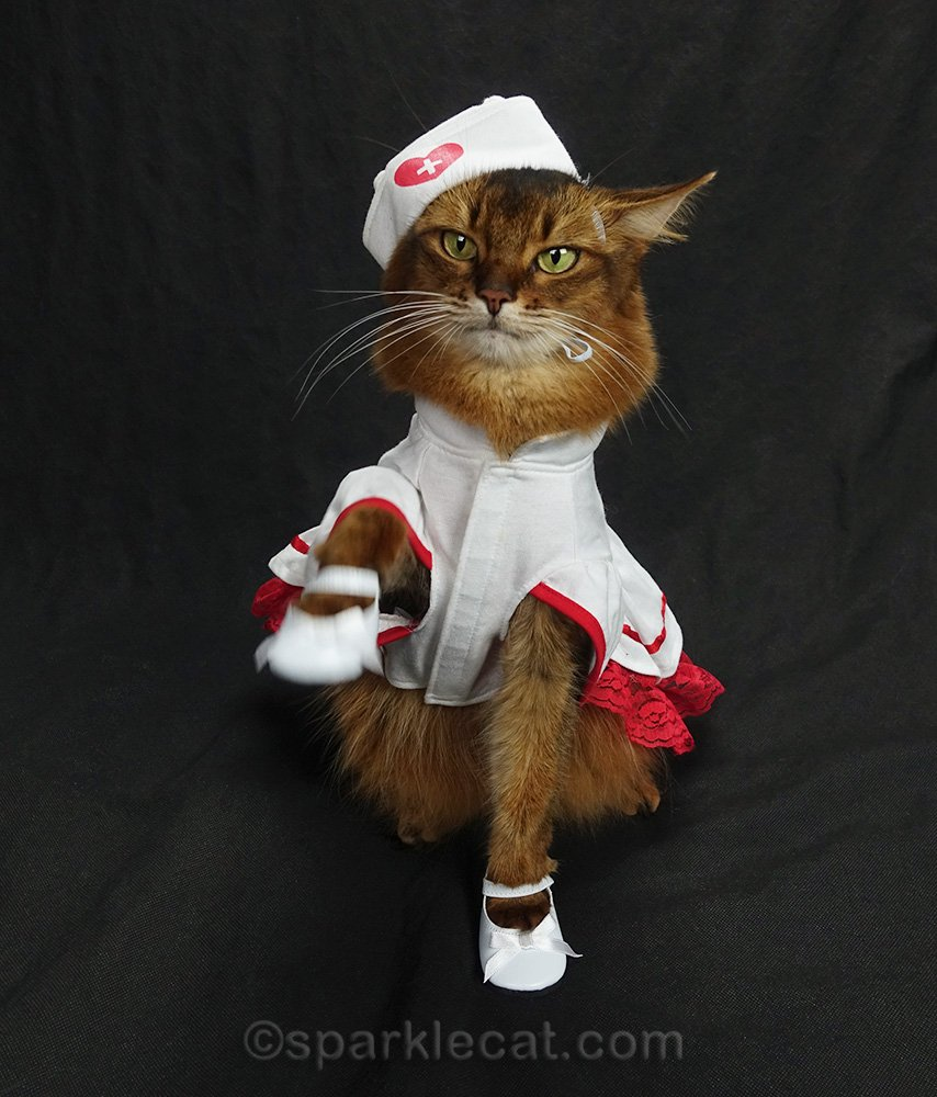 nurse kitty tired of wearing shoes