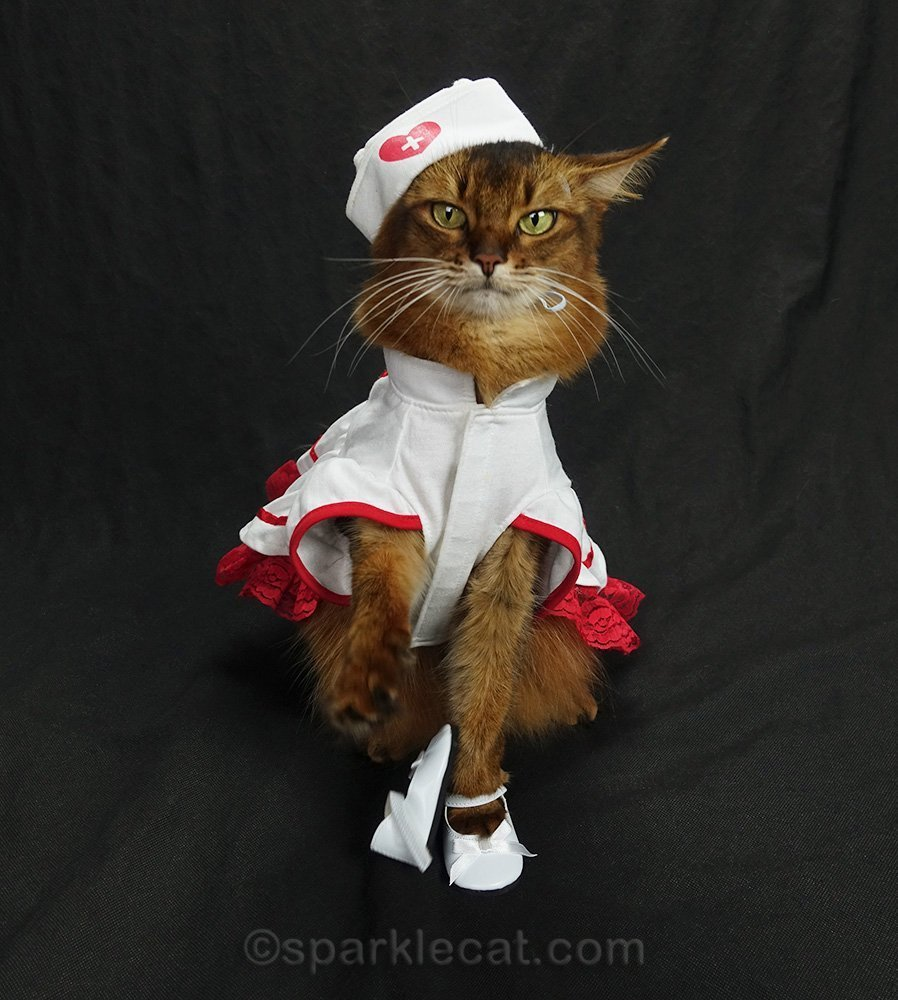 nurse cat with one shoe off