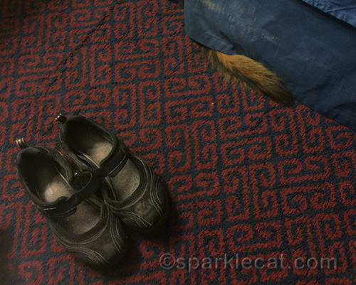 a pair of shoes, and a somali cat tail peeking out from a bedskirt