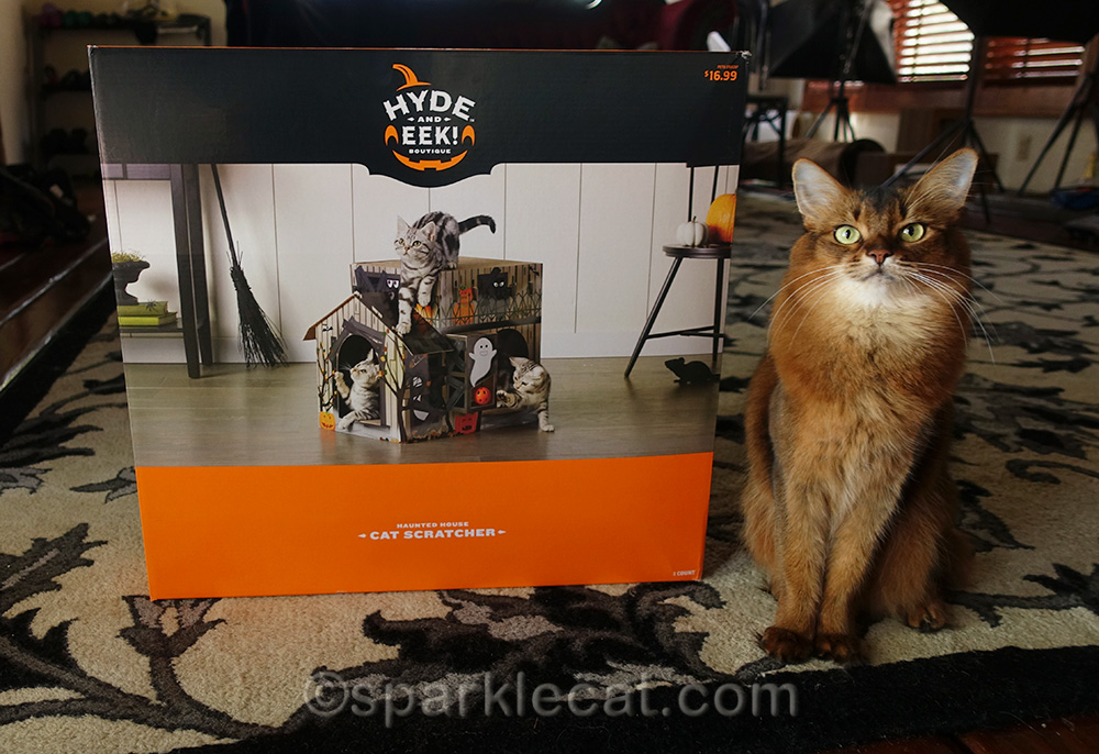 somali cat with haunted house scratcher in box