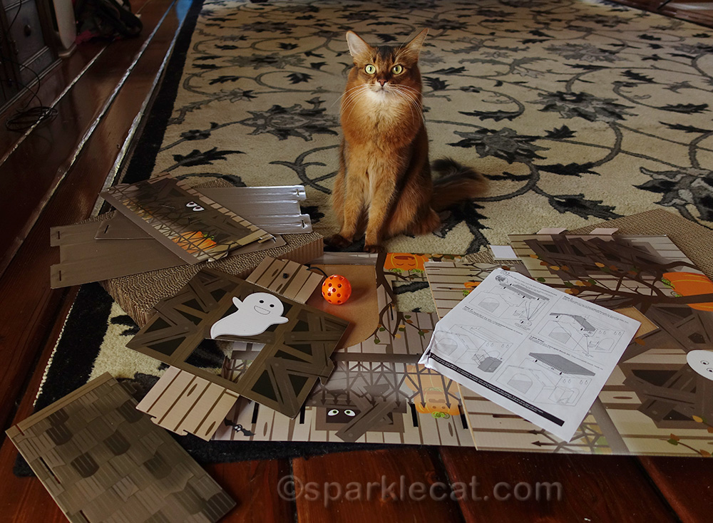 somali cat amazed by all the pieces for the haunted house assembly
