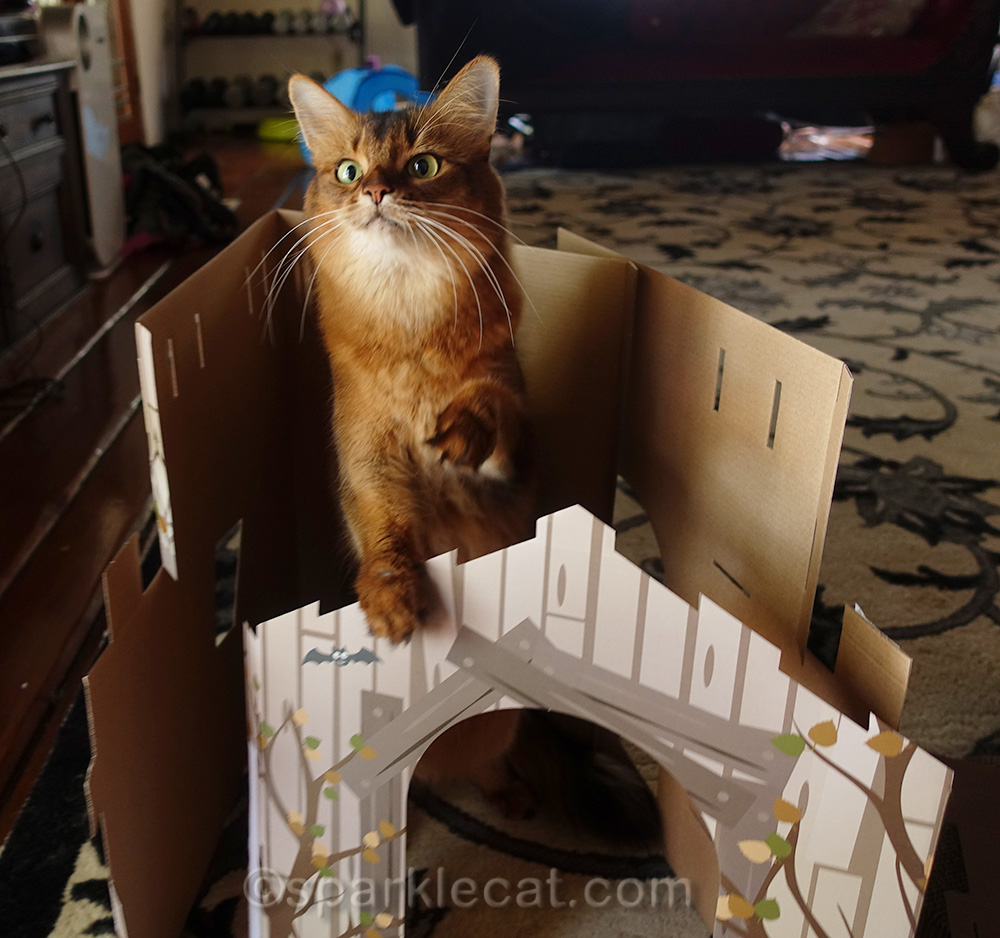 somali cat helping put together haunted house