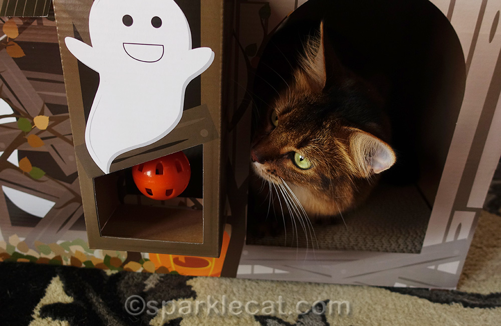 somali cat looking at toy accessory on scratcher house