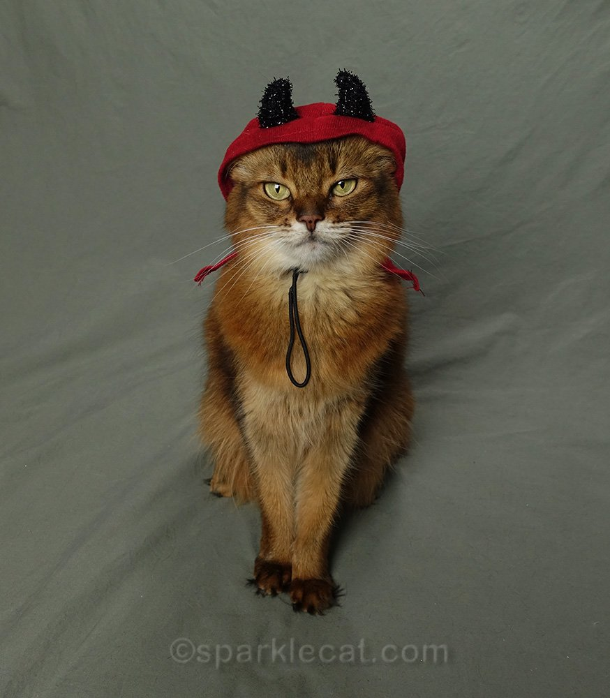 somali cat wearing a devil costume