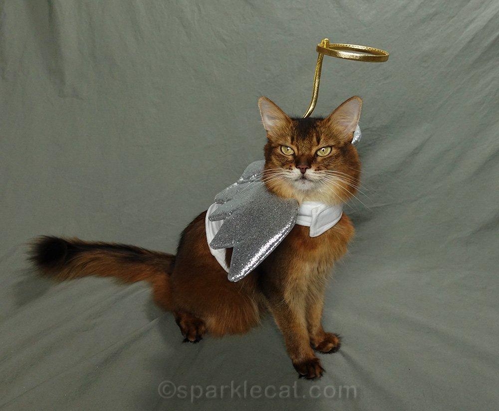 somali cat wearing angel costume