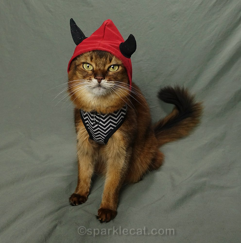 somali cat wearing devil costume.