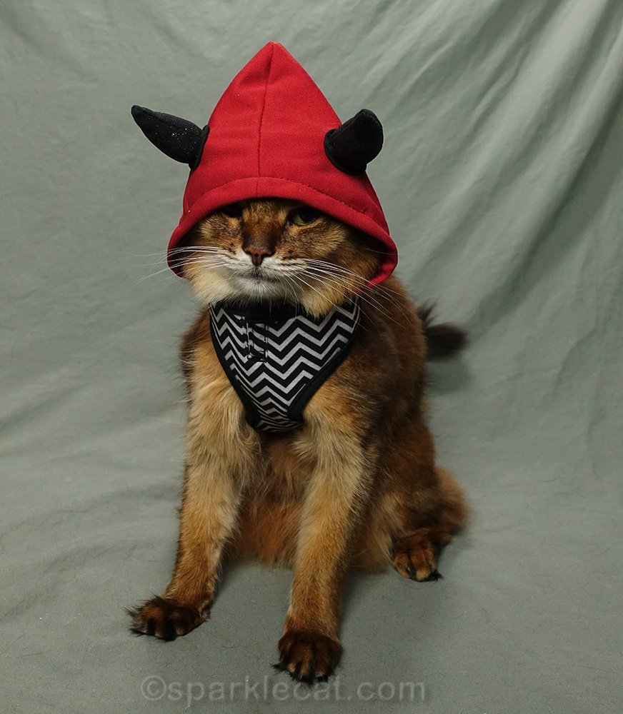 somali cat with devil hood over face