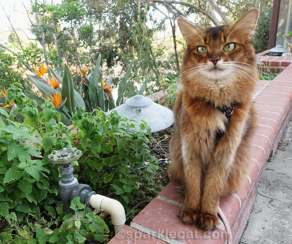 Summer finds a disaster at her catnip garden - an infestation! - and asks her readers for their suggestions.