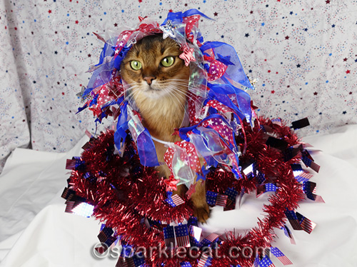 somali cat buried in fourth of july decorations