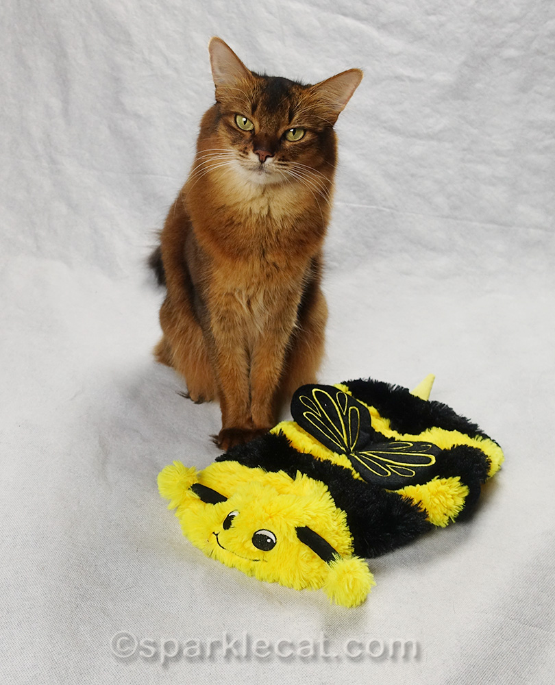 somali cat with bee costume