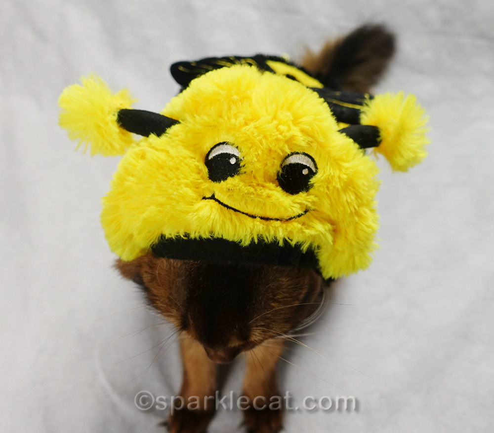 somali cat showing the face on the bee costume
