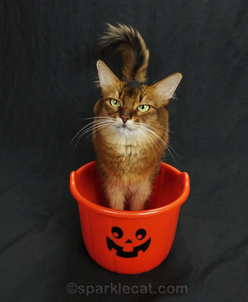 Summer explains the treat bucket trick, where she puts her front paws in the bucket