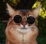 Cats Who Wear Glasses