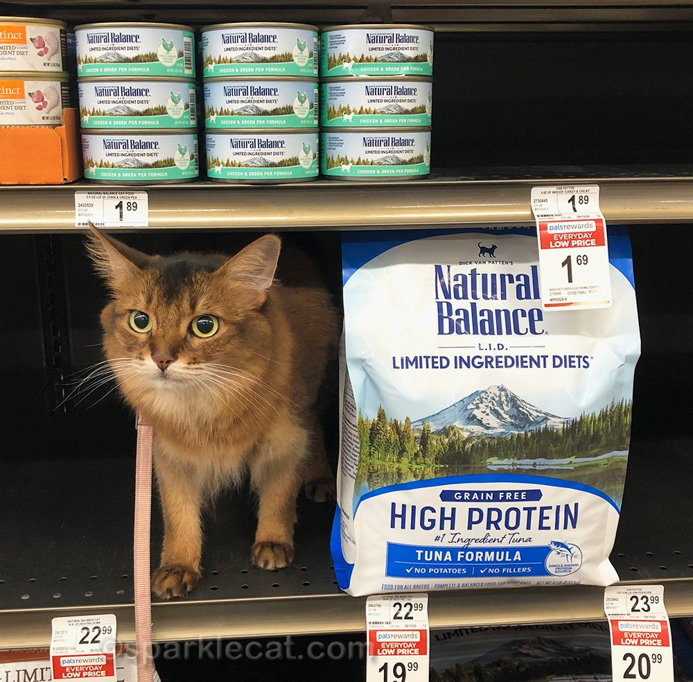 somali cat poses with Natural Balance cat food