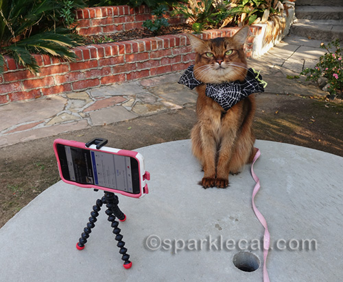 somali cat about to announce giveaway winner