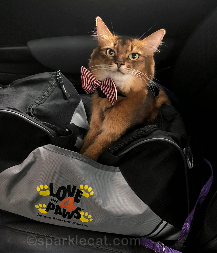 therapy cat ready to visit seniors