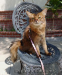 The Importance of National Feral Cat Day