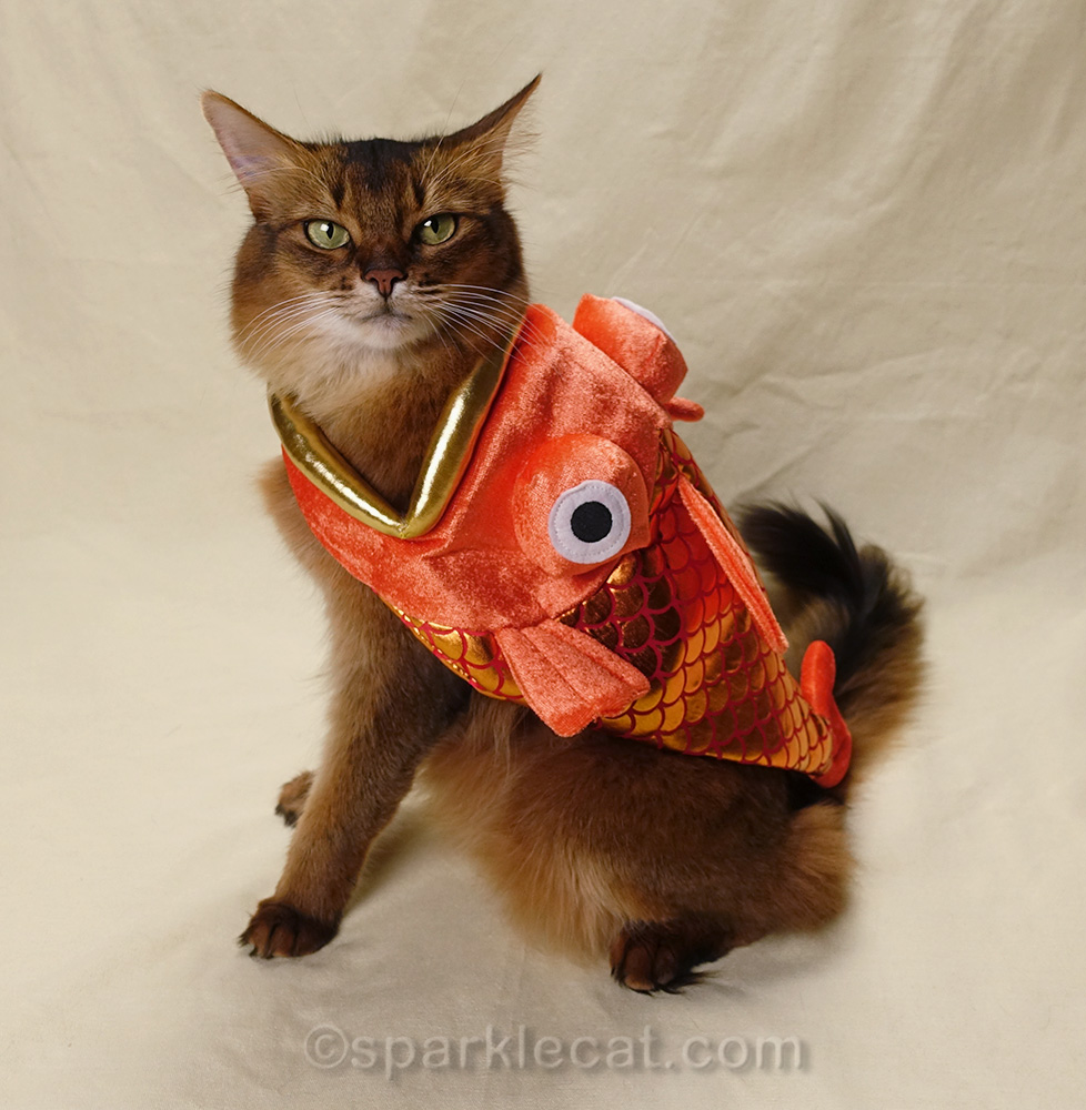 somali cat wearing fish costume