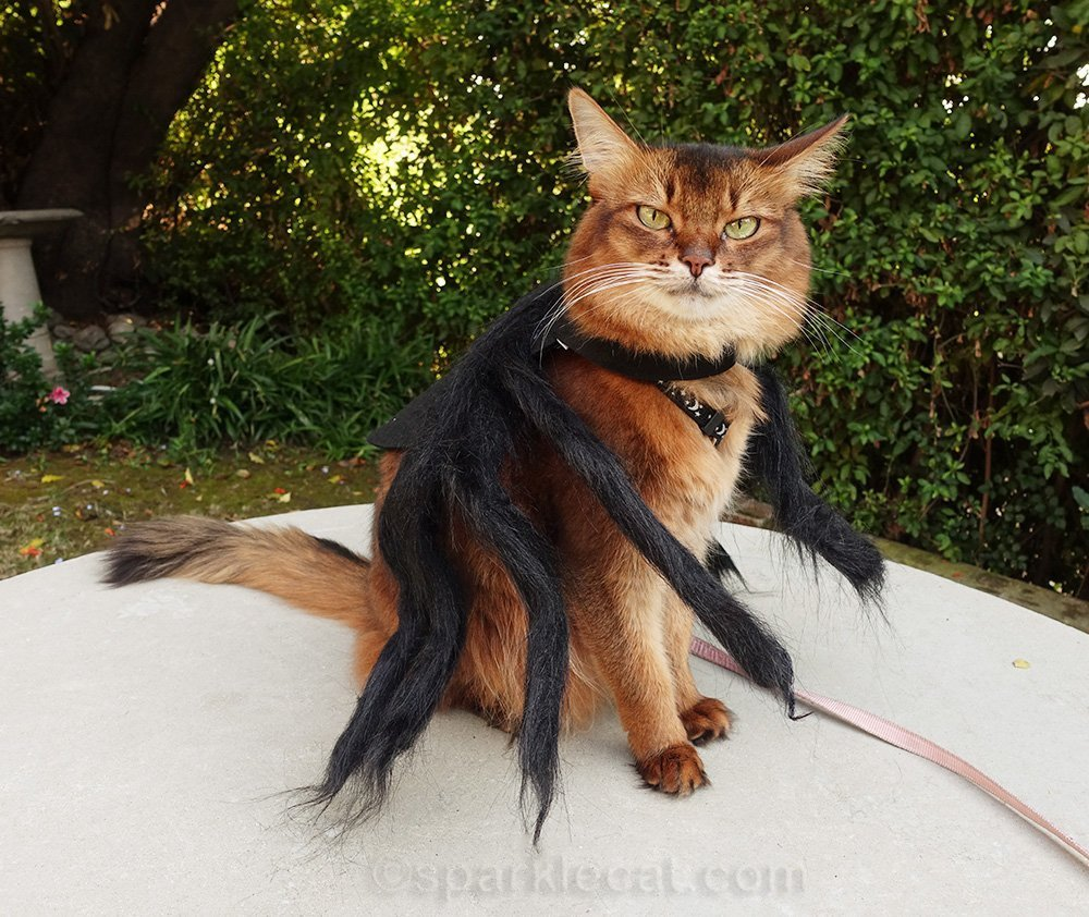 somali cat in spider cat costume from side