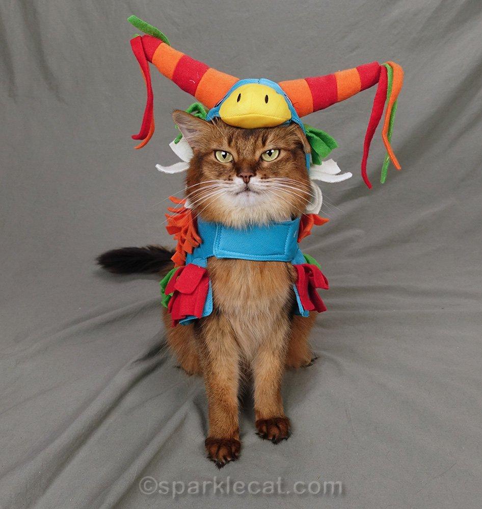 somali cat in donkey piñata costume