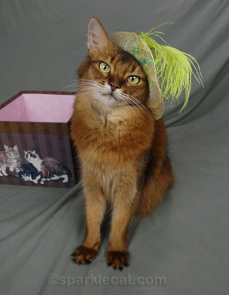 Somali cat wearing straw hat with cute green feather