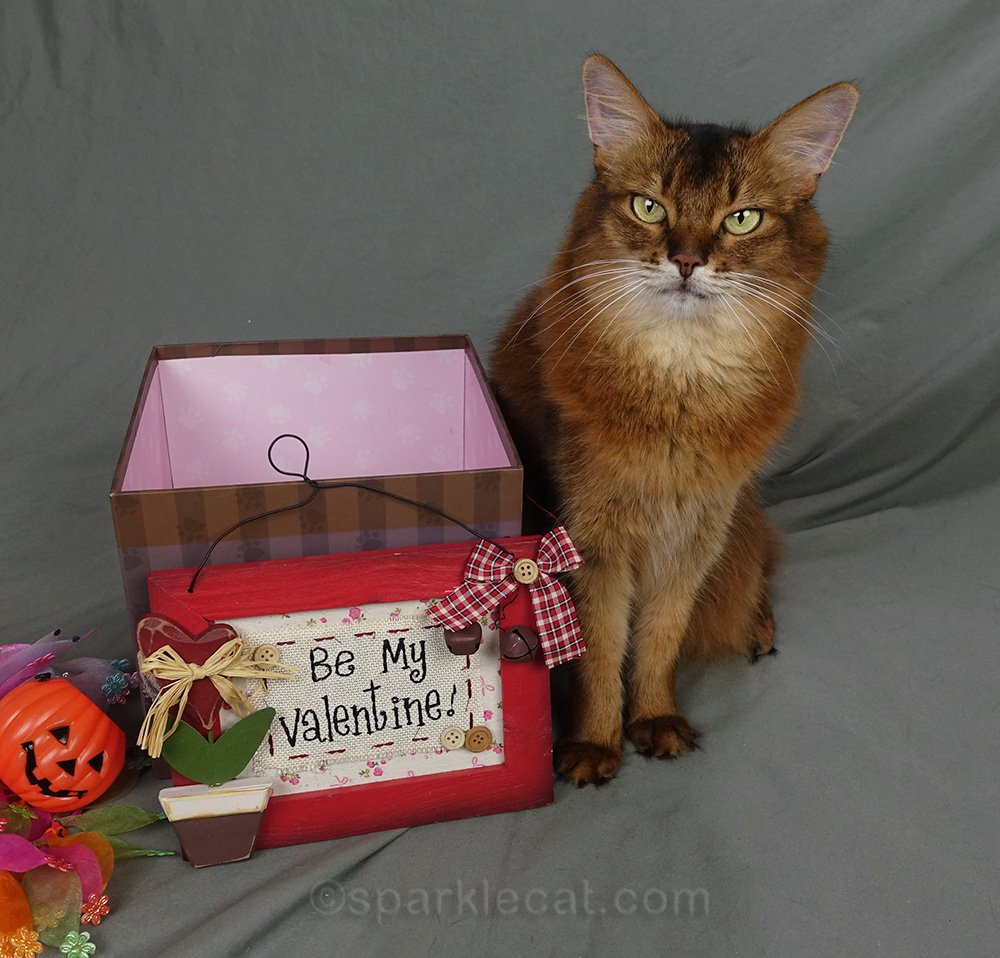 somali cat with Be My Valentine sign
