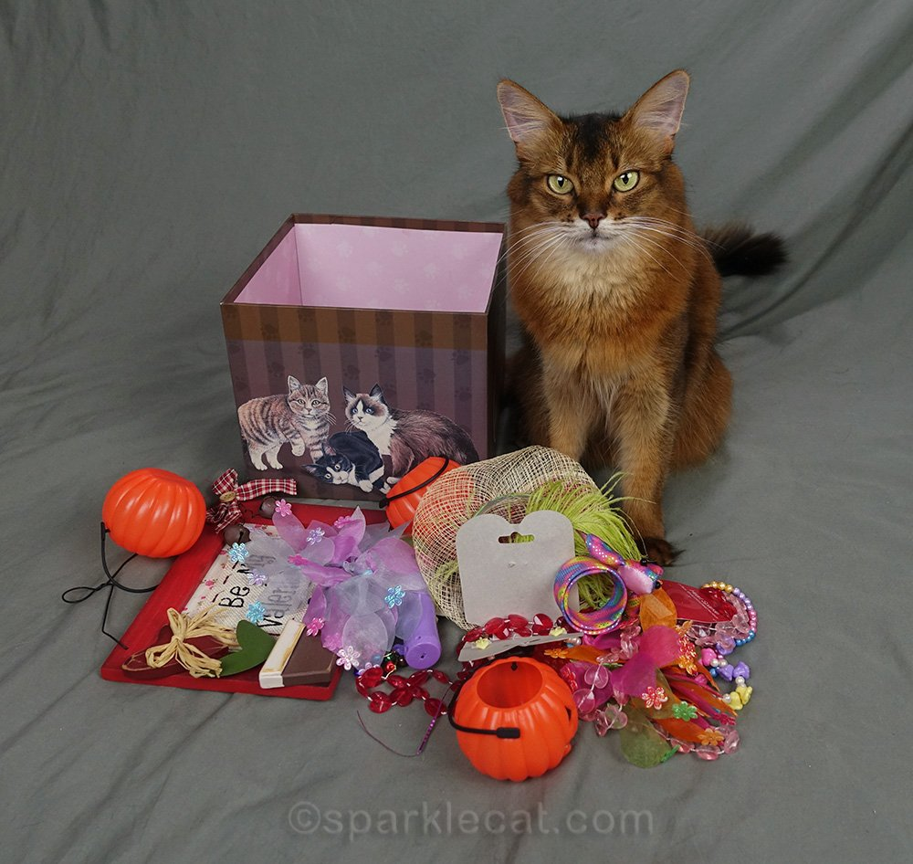 somali cat with everything that was in the box