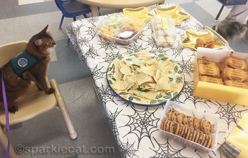 therapy cat looking at refreshments supplied by school