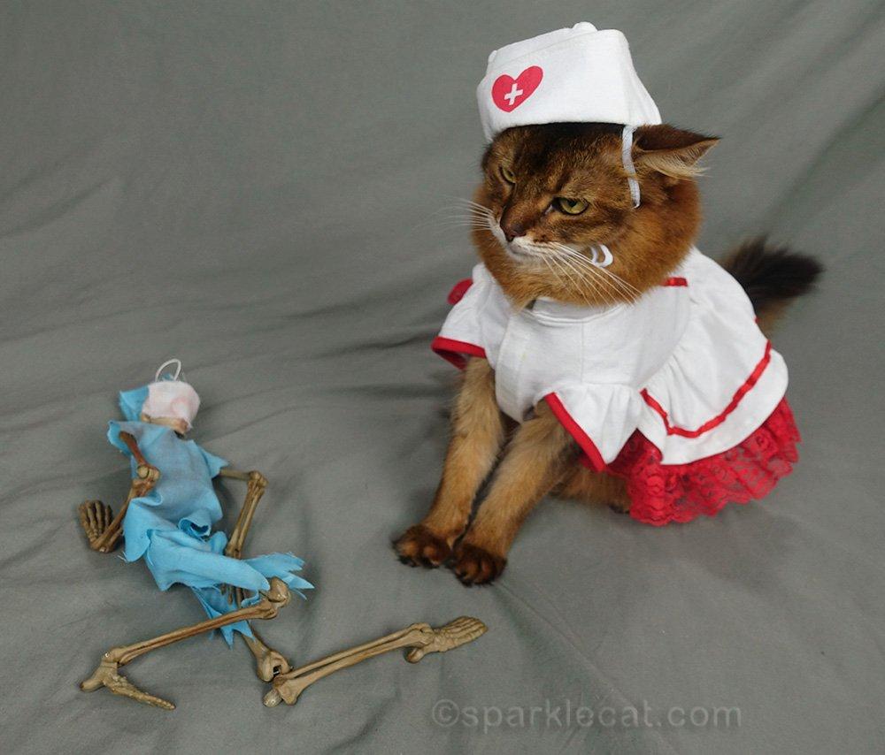 somali cat in nurse's uniform examining Dr. Bones