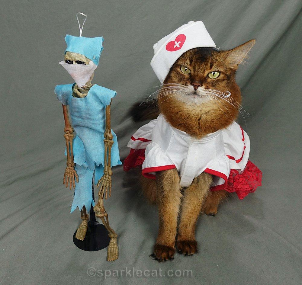 Somali cat in nurse uniform with Dr. Bones standing