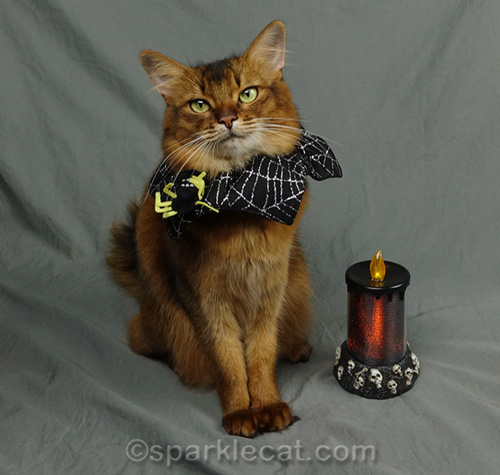 somali cat posing with halloween candle