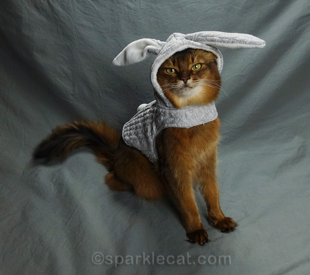 somali cat showing off more of her gray quilted bunny hoodie