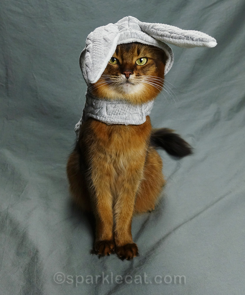 somali cat with bunny hoodie with ear over one eye