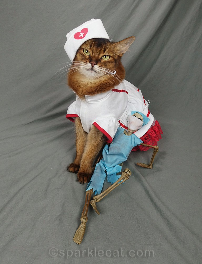Somali cat in nurse outfit annoyed at patient