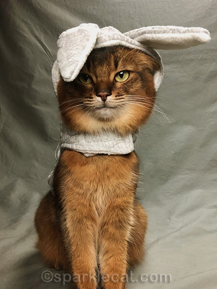 somali cat in bunny hoodie with one ear covering eye