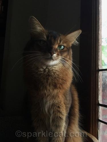 selfie of somali cat with deep shadow