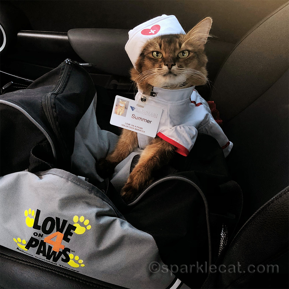 somali cat dressed up as therapy nurse kitty for Halloween