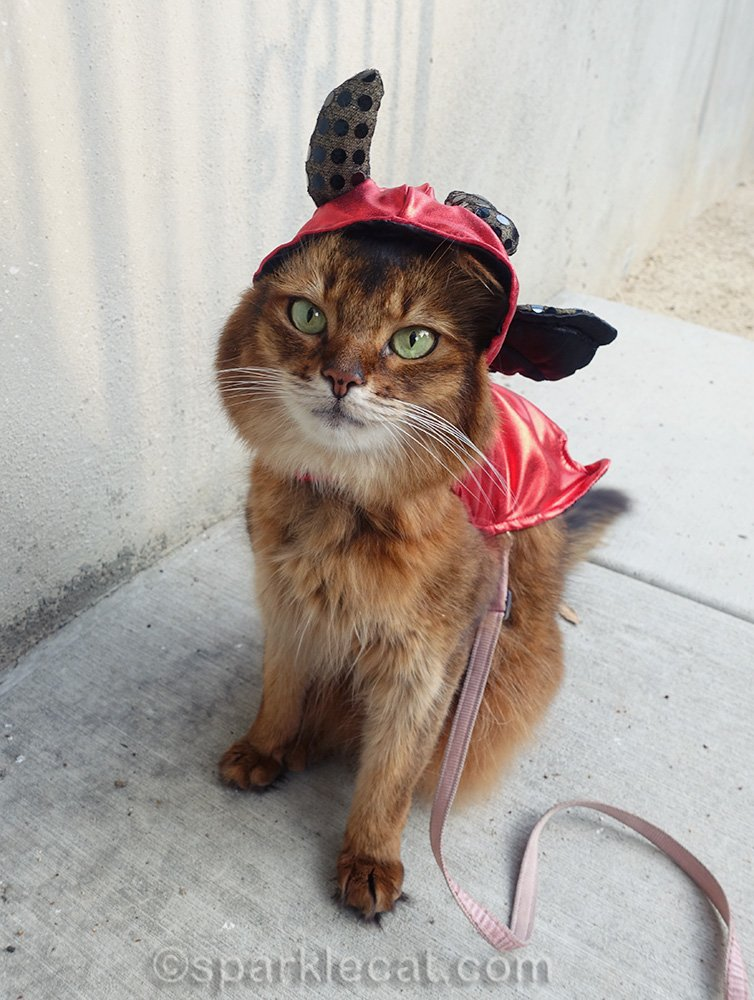 somali cat in ill fitting devil costume