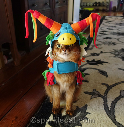 somali cat wearing pinata costume, and not terribly thrilled about it